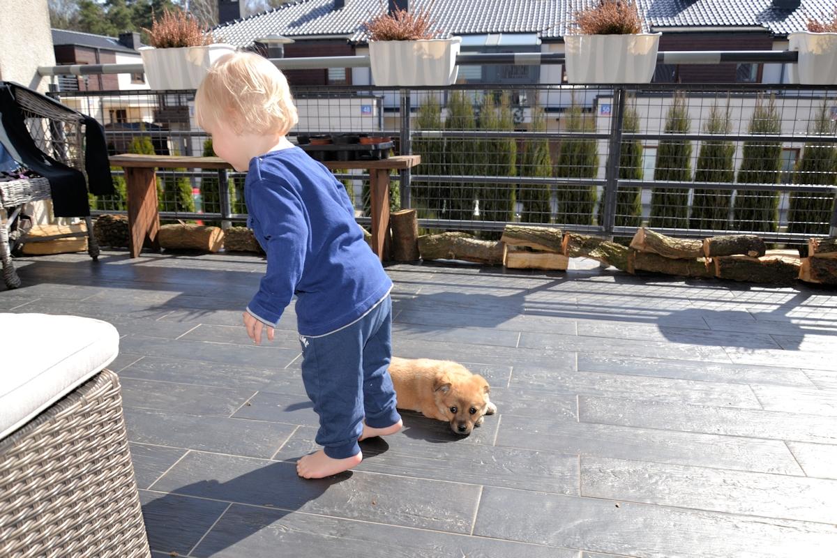 Pies i małe dziecko.