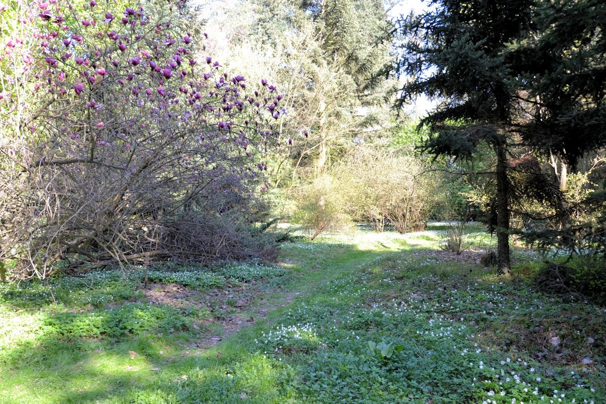 Piękne zakamarki województwa Łódzkiego, Arboretum w Rogowie.